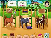 Игра Забота о лошадях