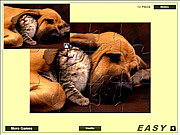 Игра Кошка и Собака