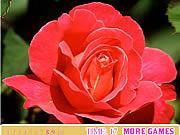 Игра Красная роза. Скрытые цифры