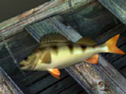 Игра Спортивная Рыбалка